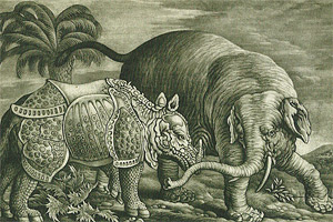 Rhinoceros and elephant