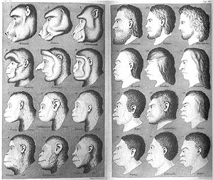 Human and ape heads