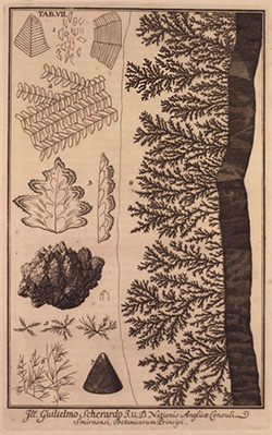 Fossil plants and dendrites