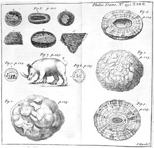 Rhinoceros, snake stones and bezoars