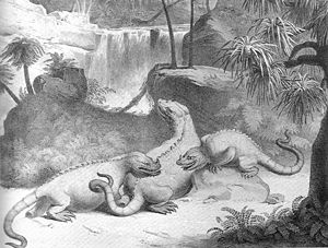 Fighting Iguanodons
