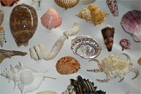 Closeup of shells