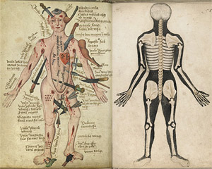 Anatomical treatise