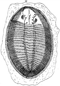 Strange Science: Invertebrates