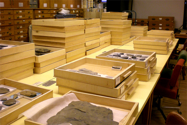 Flats full of fossils in the ROM collection