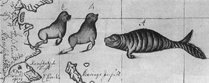 Seals and sea cow