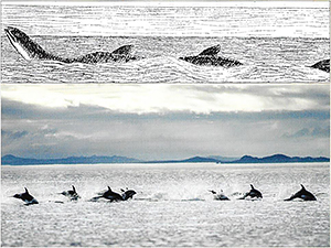 Sea serpent with modern photo of dolphins